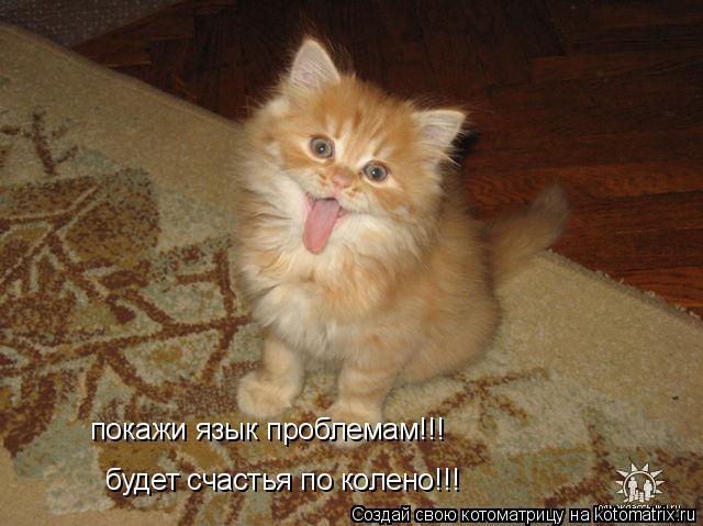 Котоматрица: будет счастья по колено!!! покажи язык проблемам!!!
