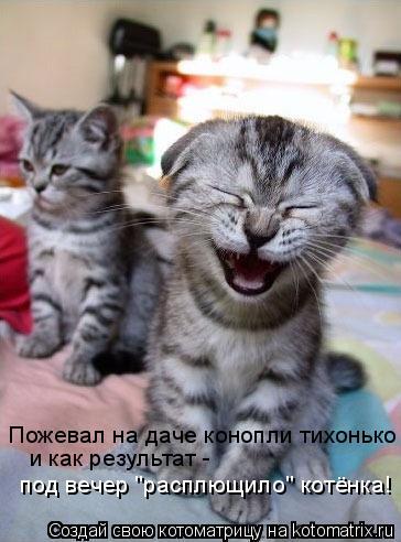 """Котоматрица: Пожевал на даче конопли тихонько и как результат -  под вечер """"расплющило"""" котёнка!"""