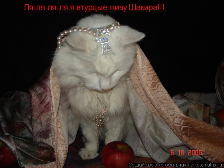 Котоматрица: Ля-ля-ля-ля я втурцые живу Шакира!!!