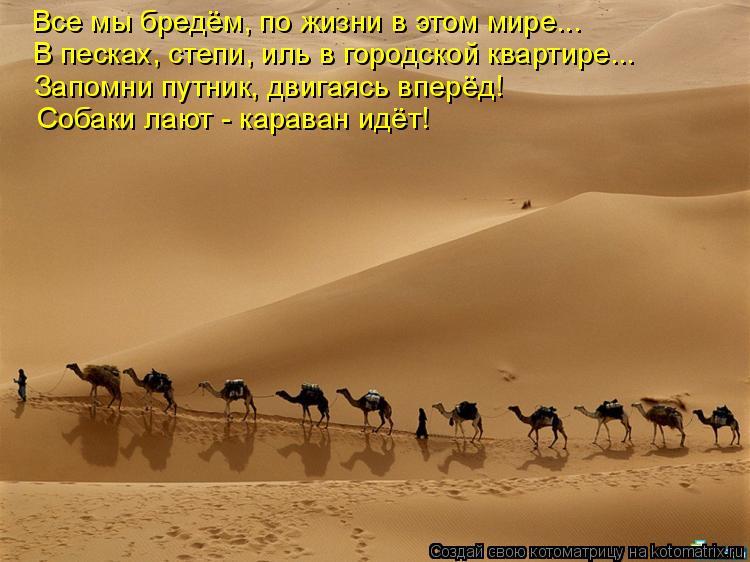 Котоматрица: Все мы бредём, по жизни в этом мире... В песках, степи, иль в городской квартире... Запомни путник, двигаясь вперёд! Собаки лают - караван идёт!