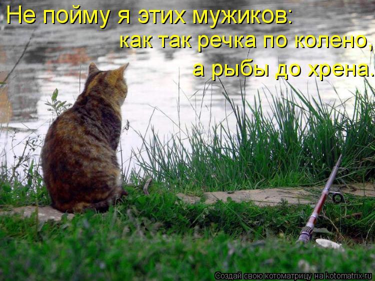 Котоматрица: Не пойму я этих мужиков:   как так речка по колено,   а рыбы до хрена.
