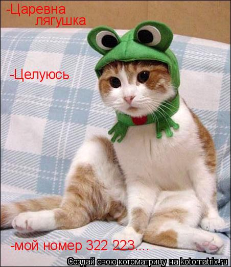 Котоматрица: -Царевна лягушка -Целуюсь -мой номер 322 223....