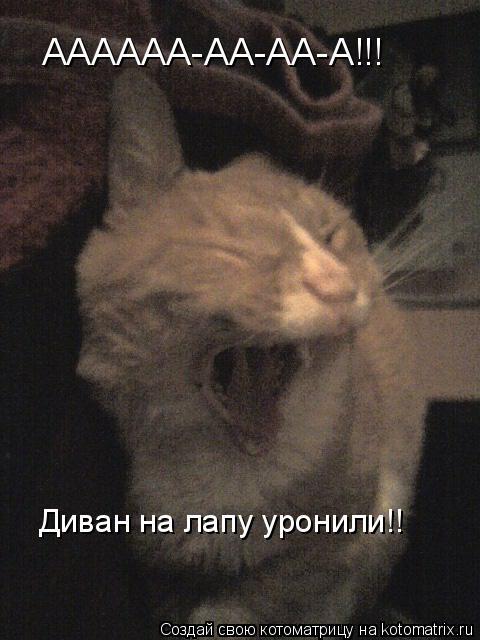 Котоматрица: АААААА-АА-АА-А!!! Диван на лапу уронили!!