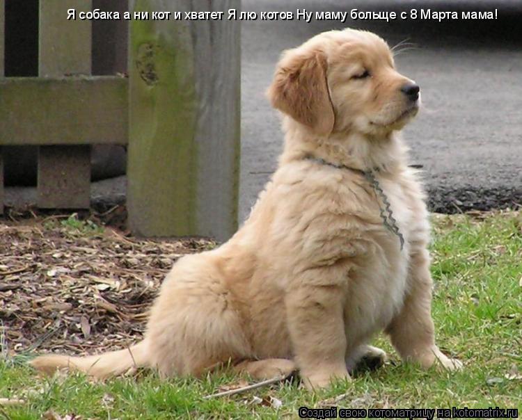 Котоматрица: Я собака а ни кот и хватет Я лю котов Ну маму больще с 8 Марта мама!