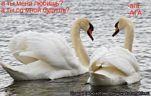 Котоматрица: а ты меня любишь? -ага а ты со мной будишь? -АГА