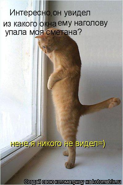 Котоматрица: Интересно,он увидел  из какого окна ему наголову упала моя сметана? нене,я никого не видел=)