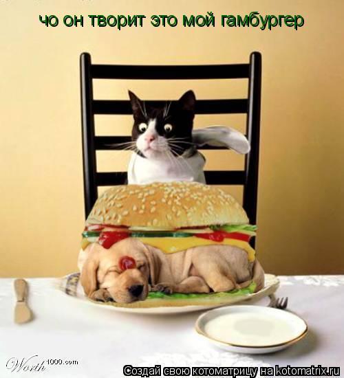 Котоматрица: чо он творит это мой гамбургер
