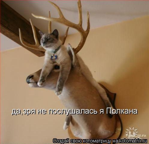 Котоматрица: да,зря не послушалась я Полкана