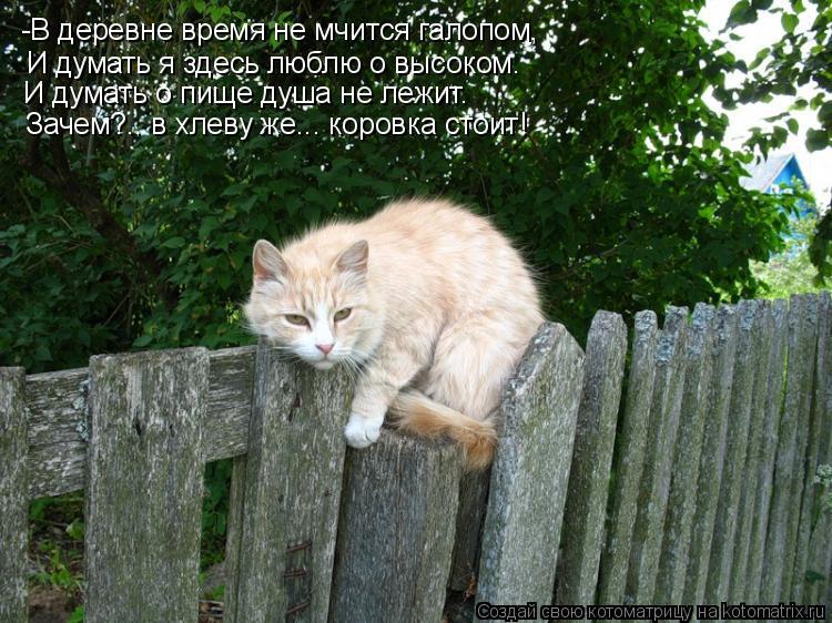 Котоматрица: -В деревне время не мчится галопом, И думать я здесь люблю о высоком. И думать о пище душа не лежит. Зачем?.. в хлеву же... коровка стоит!