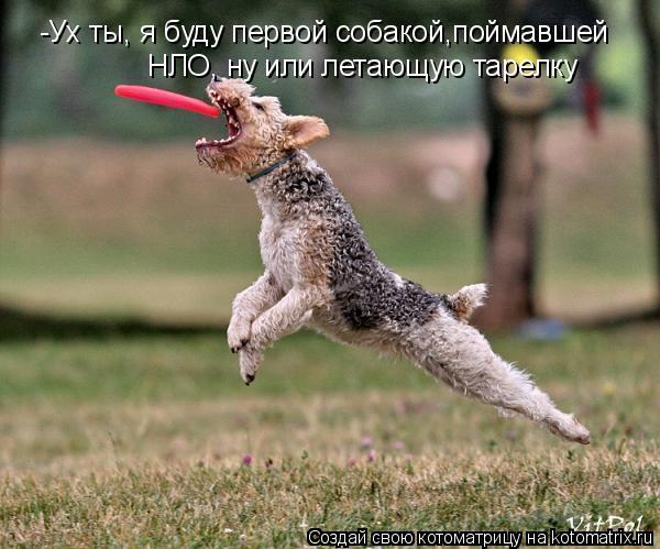 Котоматрица: -Ух ты, я буду первой собакой,поймавшей НЛО, ну или летающую тарелку