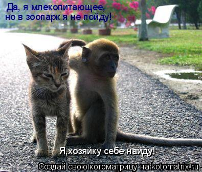 Котоматрица: Да, я млекопитающее, но в зоопарк я не пойду!  Я,хозяйку себе найду!