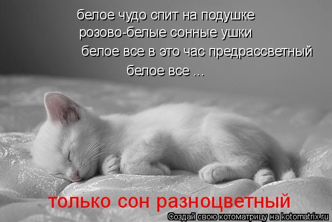 Котоматрица: белое чудо спит на подушке розово-белые сонные ушки  белое все в это час предрассветный белое все ... только сон разноцветный
