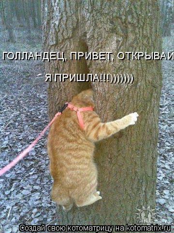 Котоматрица: ГОЛЛАНДЕЦ, ПРИВЕТ, ОТКРЫВАЙ! Я ПРИШЛА!!!)))))))
