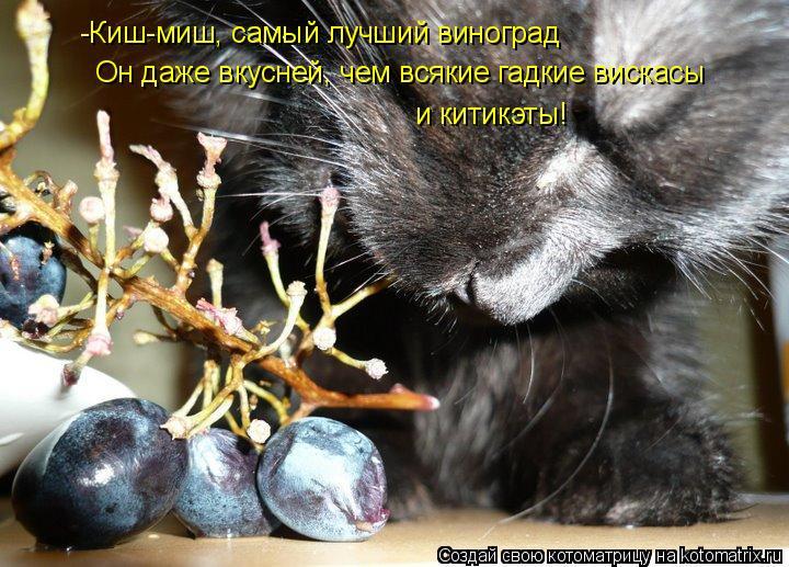 Котоматрица: -Киш-миш, самый лучший виноград Он даже вкусней, чем всякие гадкие вискасы  и китикэты!