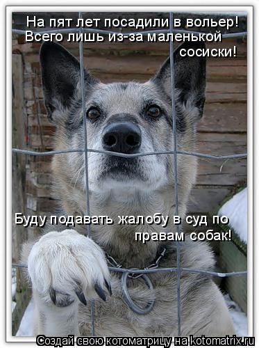 Котоматрица: На пят лет посадили в вольер! Всего лишь из-за маленькой сосиски! Буду подавать жалобу в суд по правам собак!