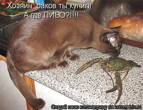 Котоматрица: Хозяин, раков ты купил! А где ПИВО?!!!!
