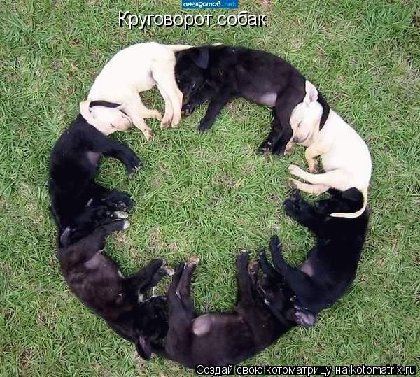 Котоматрица: Круговорот собак