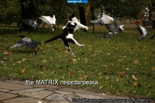 Котоматрица: the MATRIX перезагрезка