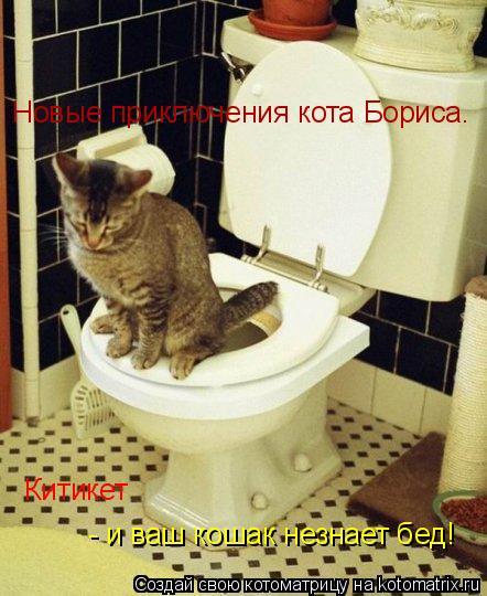 Котоматрица: Новые приключения кота Бориса. Китикет - и ваш кошак незнает бед!
