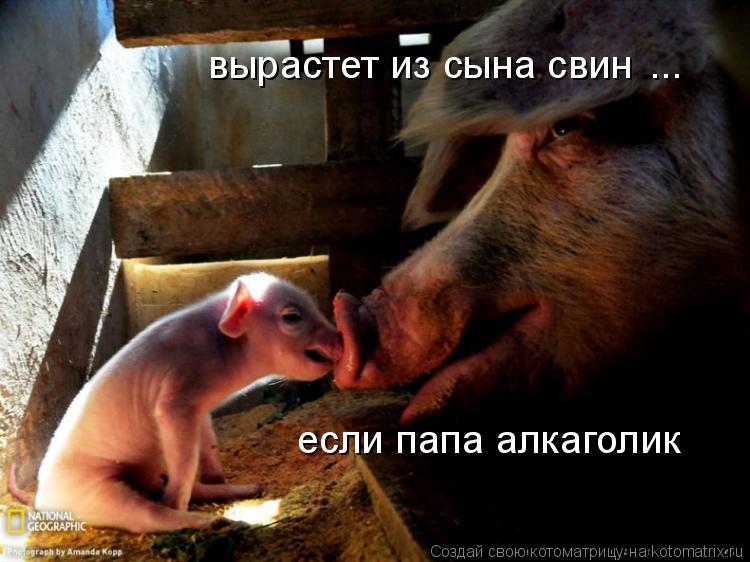 Котоматрица: вырастет из сына свин если папа алкаголик ...