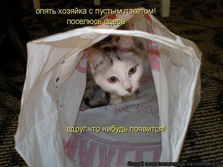 Котоматрица: опять хозяйка с пустым пакетом! поселюсь сдесь вдруг что нибудь появится!
