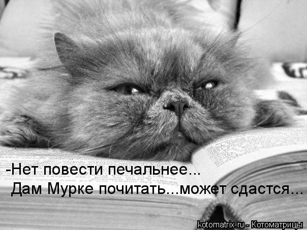 Котоматрица: -Нет повести печальнее... Дам Мурке почитать...может сдастся...