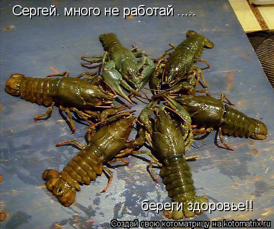Котоматрица: Сергей. много не работай ..... береги здоровье!!