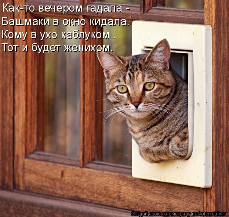 Котоматрица: Как-то вечером гадала -  Башмаки в окно кидала. Кому в ухо каблуком –  Тот и будет женихом.