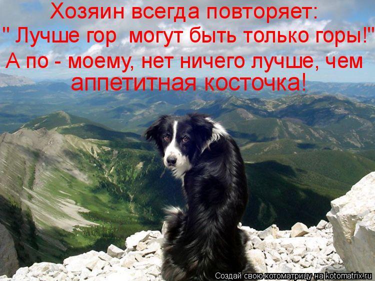 """Котоматрица: Хозяин всегда повторяет: """" Лучше гор  могут быть только горы!""""  аппетитная косточка! А по - моему, нет ничего лучше, чем"""