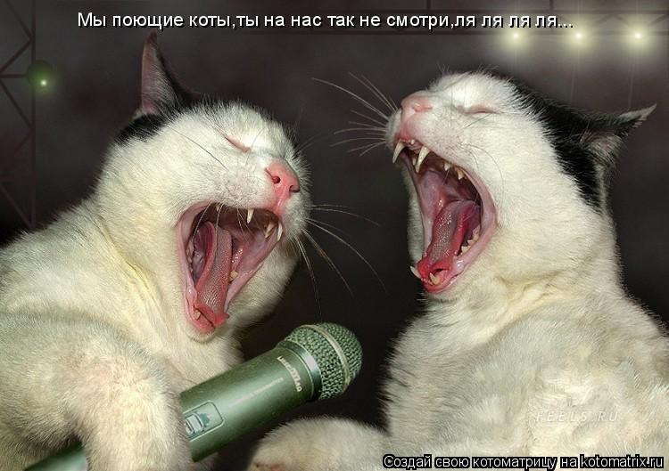 Котоматрица: Мы поющие коты,ты на нас так не смотри,ля ля ля ля...