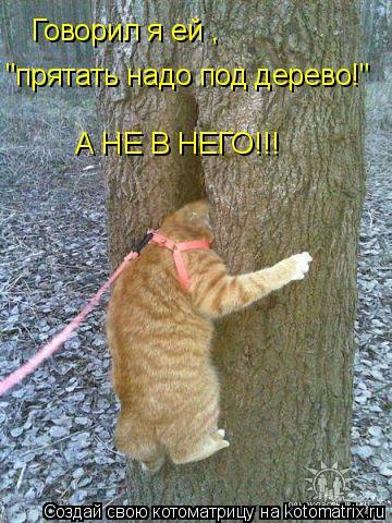 """Котоматрица: Говорил я ей""""Пряч под дерево а не в него!"""" Говорил я ей , """"прятать надо под дерево!"""" А НЕ В НЕГО!!!"""