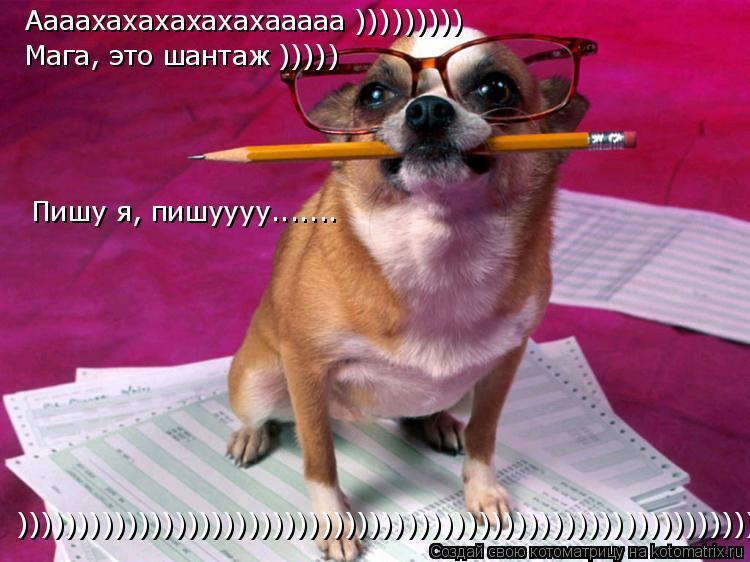 Котоматрица: Аааахахахахахахааааа ))))))))) Мага, это шантаж ))))) Пишу я, пишуууу....... )))))))))))))))))))))))))))))))))))))))))))))))))))))))))))))))))))