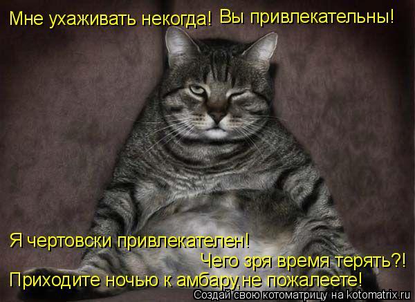 Кот за амбаром