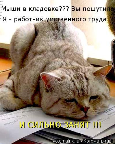 Котоматрица: Я - работник умственного труда ... И СИЛЬНО ЗАНЯТ !!! Мыши в кладовке??? Вы пошутили?