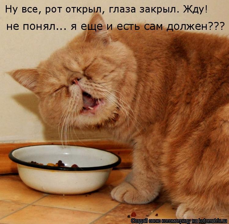 Котоматрица: Ну все, рот открыл, глаза закрыл. Жду! не понял... я еще и есть сам должен???