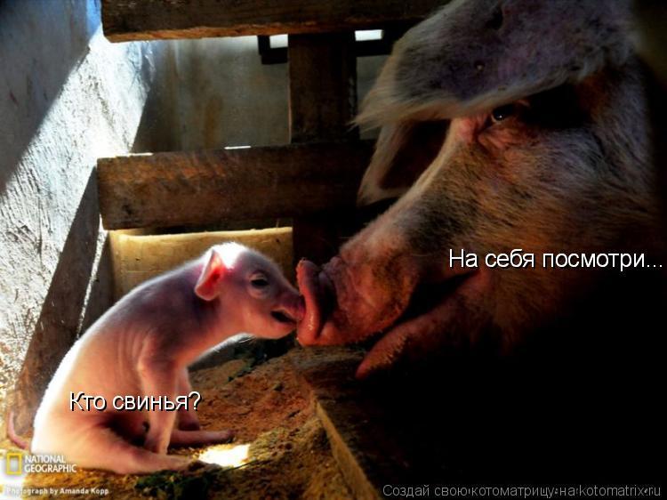 Котоматрица: Кто свинья? На себя посмотри... На себя посмотри...