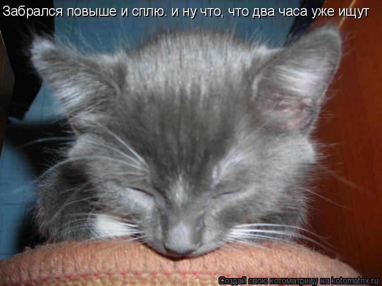 Котоматрица: Забрался повыше и сплю. и ну что, что два часа уже ищут
