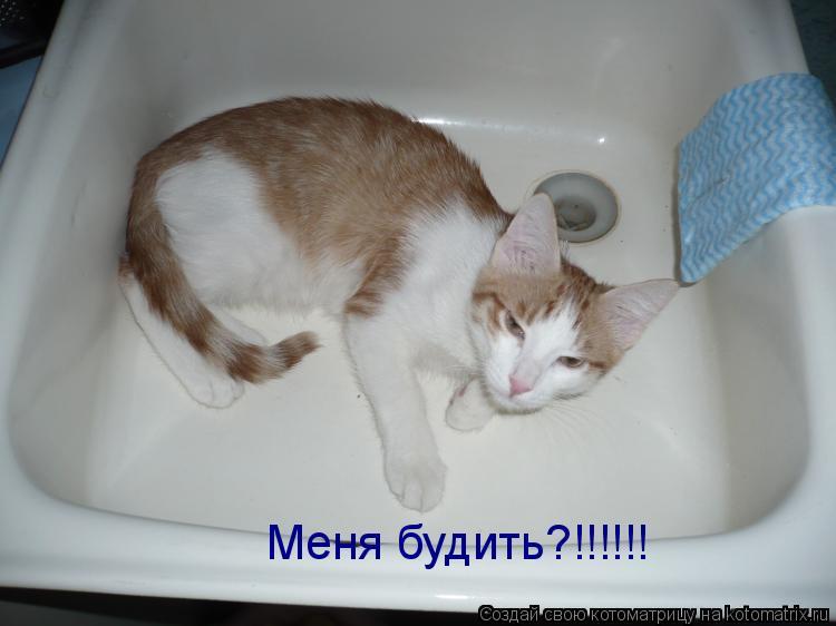 Котоматрица: Меня будить?!!!!!!