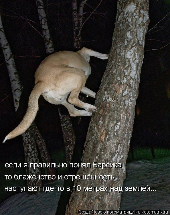 Котоматрица: если я правильно понял Барсика, то блаженство и отрешённость наступают где-то в 10 метрах над землёй...