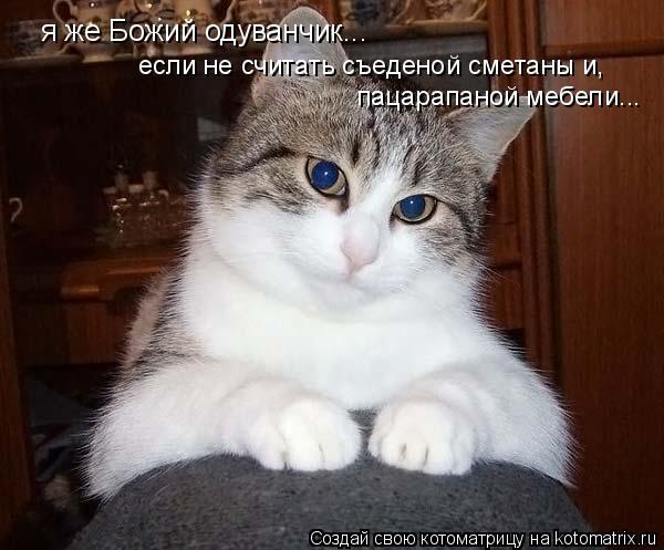 Котоматрица: я же Божий одуванчик... если не считать съеденой сметаны и, пацарапаной мебели...