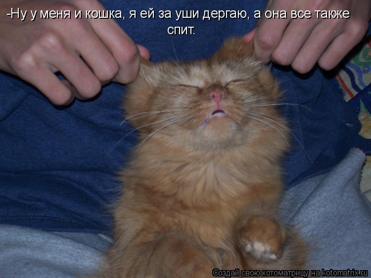Котоматрица: -Ну у меня и кошка, я ей за уши дергаю, а она все также  спит.