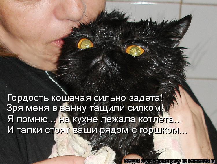 Котоматрица: Гордость кошачая сильно задета! Зря меня в ванну тащили силком! Я помню... на кухне лежала котлета... И тапки стоят ваши рядом с горшком...