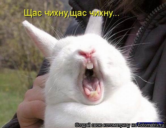 Котоматрица: Щас чихну,щас чихну...
