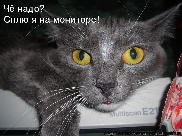 Котоматрица: Чё надо? Сплю я на мониторе!
