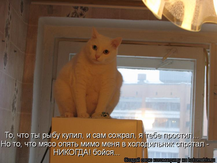 Котоматрица: То, что ты рыбу купил, и сам сожрал, я тебе простил Но то, что мясо опять мимо меня в холодильник спрятал - НИКОГДА! бойся... ...
