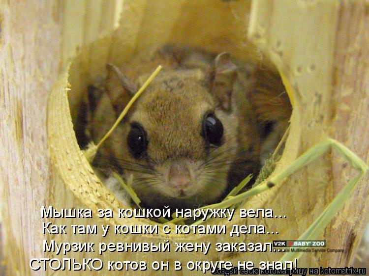 Котоматрица: Мышка за кошкой наружку вела... Как там у кошки с котами дела... Мурзик ревнивый жену заказал... СТОЛЬКО котов он в округе не знал!