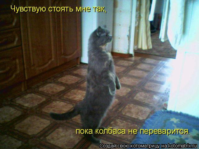 Котоматрица: Чувствую стоять мне так, пока колбаса не переварится.