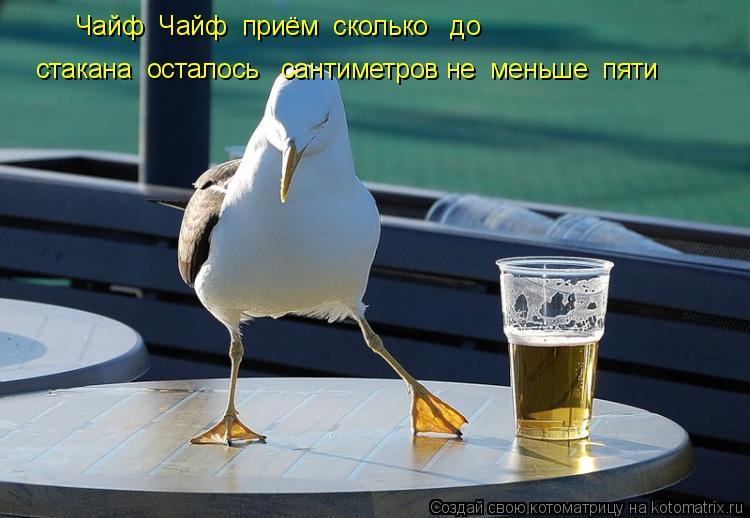 Котоматрица: Чайф  Чайф  приём  сколько   до стакана  осталось   сантиметров не  меньше  пяти