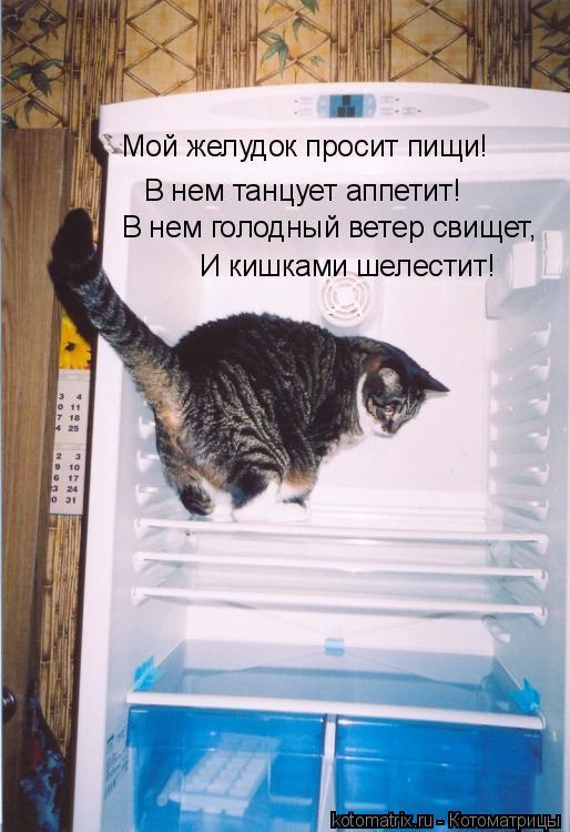 Котоматрица: Мой желудок просит пищи! В нем танцует аппетит! В нем голодный ветер свищет, И кишками шелестит!