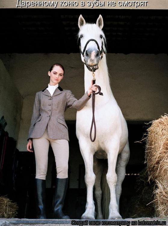 Котоматрица: Даренному коню в зубы не смотрят